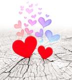 Deux coeurs Image stock