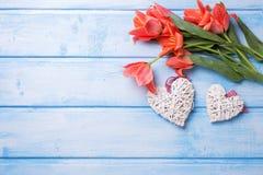 Deux coeurs décoratifs et tulipes de corail aromatiques de couleur fleurit dessus Photographie stock