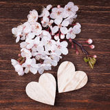 Deux coeurs en bois placés bien avec de belles fleurs de cerisier Photos libres de droits