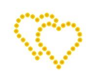 Deux coeurs en fonction des pissenlits jaunes Photo libre de droits