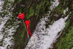 Deux coeurs rouges sur l'arbre Photos libres de droits