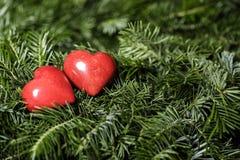 Deux coeurs rouges sur le fond des branches de sapin Jour de Valentine Image stock