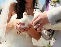 Deux colombes blanches comme neige dans les mains des nouveaux mariés Image libre de droits