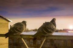 Deux colombes d'amants sur le balcon pour saluer le coucher du soleil Images stock