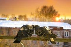 Deux colombes d'amants sur le balcon pour saluer le coucher du soleil et le soleil Photos stock