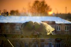 Deux colombes d'amants sur le balcon pour saluer le coucher du soleil et le soleil Image stock