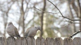 Deux colombes sur la barrière Images stock