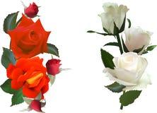 Deux compositions rouges et trois par blanc d'isolement en roses Photographie stock