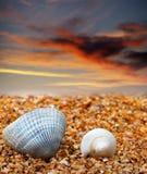 Deux coquillages sur la plage de sable Image libre de droits