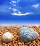 Deux coquillages sur la plage de sable Photo stock