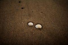 Deux coquilles à la plage Image libre de droits