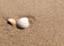 Deux coquilles dans le sable Image libre de droits