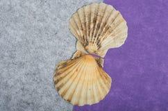 Deux coquilles de mer Photographie stock