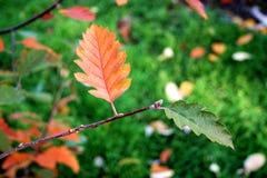Deux couleurs de l'automne photo stock