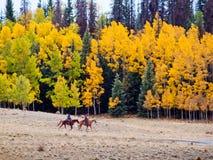 Deux cowboys photographie stock