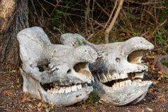 Deux crânes massifs de rhinocéros photo libre de droits