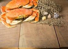 Crabe de Dungeness prêt à cuisiner Image libre de droits