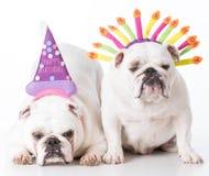 Deux crabots d'anniversaire Photo stock