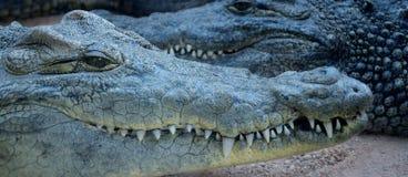 Deux crocodiles Photographie stock