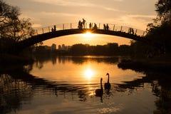 Deux cygnes au lac tandis que les gens observent le coucher du soleil, parc d'Ibirapuera, Sao Paulo, Brésil Image libre de droits