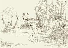 Deux cygnes dans le lac de stationnement Photo libre de droits