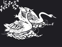 Deux cygnes en noir et blanc photos libres de droits