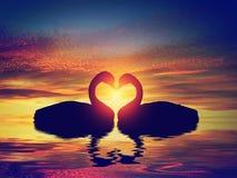 Deux cygnes faisant une forme de coeur au coucher du soleil Le jour de Valentine Images libres de droits