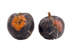 Deux d'isolement et pomme putréfiée de l'hiver Photographie stock libre de droits