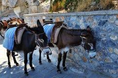 Deux d'un âne avec un support de selle dans la ville de Lindos ENTRE AUTRES la construction de C photographie stock