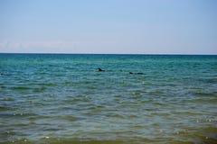 Deux dauphins au sujet de la navigation en mer image stock