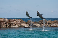 Deux dauphins branchants Photo stock