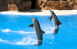 Deux dauphins de danse Photo stock