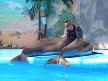 Deux dauphins et une fille (manipulateur) Images libres de droits