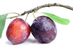 Deux de prunes mûres sur un fond blanc Photos libres de droits