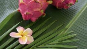 Deux Dragon Fruit thaïlandais tropical exotique cru frais ont également appelé Pitayas tournant sur la feuille de banane banque de vidéos
