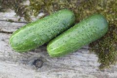 Deux du concombre 2 Photos libres de droits