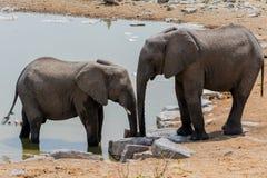 Deux elefants Image libre de droits