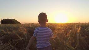 Deux enfants courus dans le domaine au coucher du soleil clips vidéos