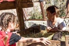 Deux enfants - garçon et fille - prenant soin des animaux domestiques dessus loin Photos libres de droits