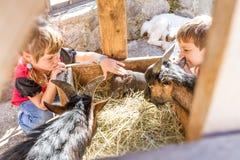 Deux enfants - garçon et fille - prenant soin des animaux domestiques dessus loin Images libres de droits