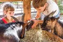 Deux enfants - garçon et fille - prenant soin des animaux domestiques dessus loin Photos stock
