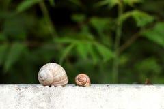 Deux escargots dans le jardin sur l'herbe Photographie stock