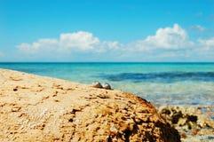Deux escargots de mer sur la plage contre l'océan Photographie stock libre de droits