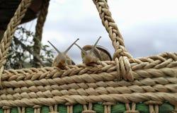 Deux escargots observant d'un panier en osier images libres de droits