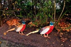 Deux faisans créatifs sur le bord de la route Photographie stock