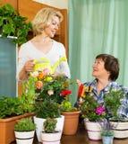 Deux femmes agées avec des pots de fleurs Photographie stock libre de droits