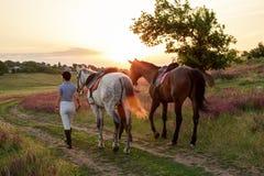 Deux femmes et deux chevaux extérieurs en nature heureuse de coucher du soleil d'été ensemble Photographie stock libre de droits