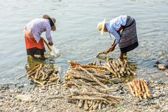 Deux femmes lavent le bois de thanakha en rivière de Mann photographie stock