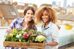 Deux femmes tenant la boîte d'usines sur le jardin de dessus de toit Photographie stock libre de droits