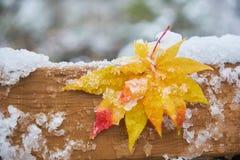 Deux feuilles d'érable tomber et attacher au plat en bois avec la neige photos libres de droits